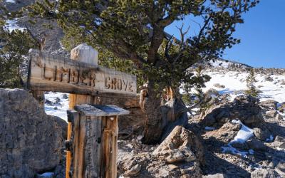 Limber Grove Trail is an Adventure!