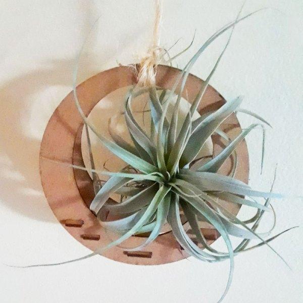 hanging wooden, circular air plant holder