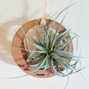 hanging wooden, circular air plant holder