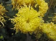 Macau-Municipal-Hall-flowers