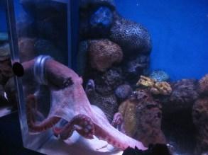 Ocean-Park-Hong-Kong-octopus
