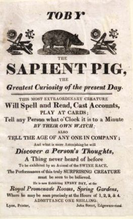 Poster for Toby the Sapient pig
