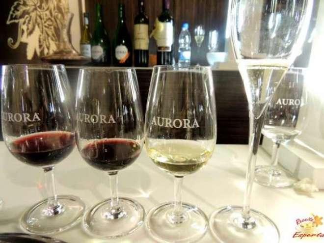 Líder de mercado no país, Vinícola Aurora comemora 84 anos,alcançando a liderança também nas exportações de vinhos do Brasil.