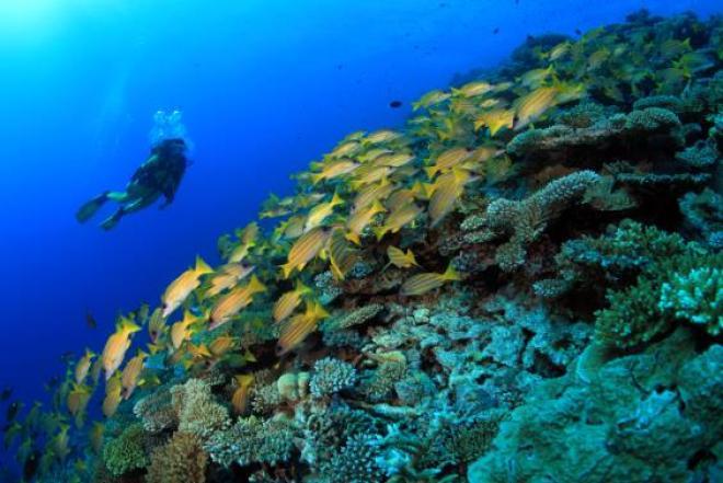 A cidade tem dezenas de diving centers, principalmente dentro dos resorts da Zona Hoteleira.