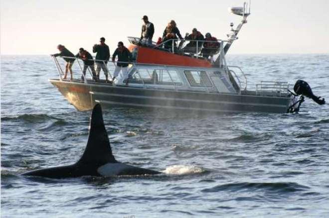 Observação de baleias: na Lagoa do Peixe, no Rio Grande do Sul, uma das principais atrações ocorre apenas entre julho e novembro.