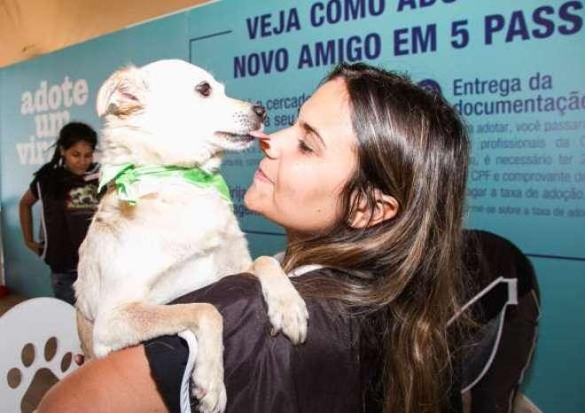 Evento acontecerá durante todo o final de semana para encontrar novos lares para mais cães abandonados. Iniciativa já contabiliza mais de 180 adoções.