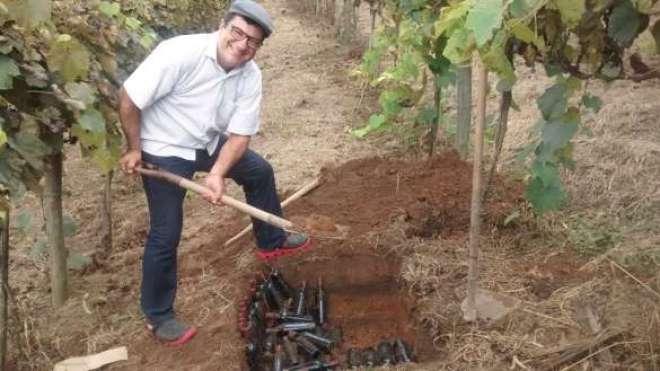 enterrando garrafas de vinho entre os pés de uva, em São Roque