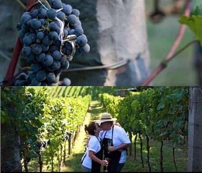 Vinícola comemora sucesso da temporada 2017 e registra pedido de noivado feito durante a tradicional colheita.