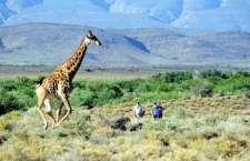 Sanbona pioneira na conservação e ecoturismo na região, para tanto, conta com uma equipe totalmente dedicada a preservação