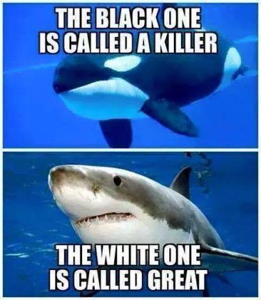Killer Whale and Shark