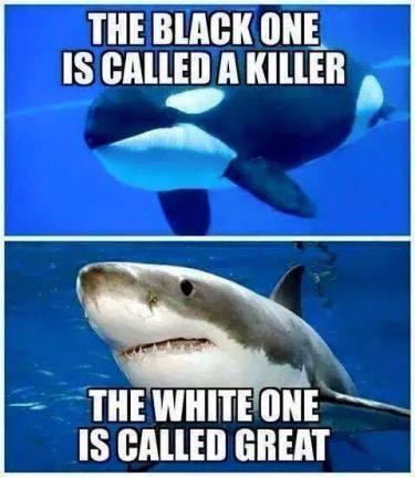 Killer Whale and Shark