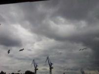 Hab ich schon erwähnt, dass das Wetter die zweite Hälfte über richtig schlecht war? Also Regen, Regen, Regen und KALT. Hier noch ein paar Möwen für die Hafenatmo.