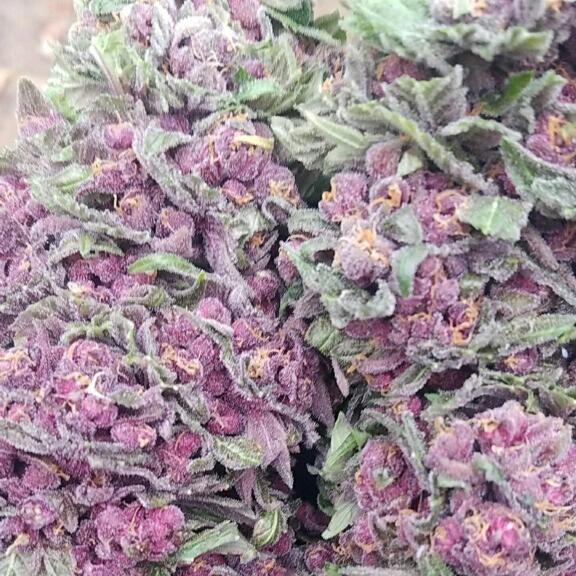 marijuanabud