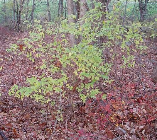 Bush Be Gone Herbicide