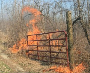 Picture of high-intensity fire fueled by Japanese stiltgrass litter.