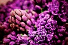 Purple Flowers 1-Rungis Market, France,10x15-other sizes available-purple-flowers-floral-nature-up-close-unique