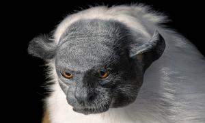 Tim Flach tire le portrait aux animaux en danger