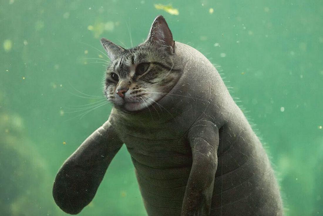 Sur Photoshop, elle fusionne ses chats avec d\u0027autres animaux