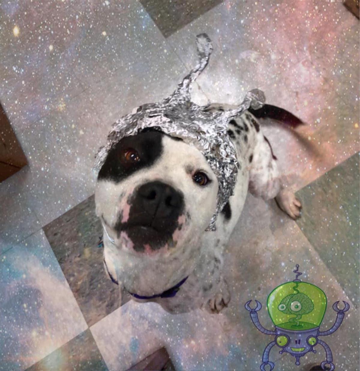OKC Animal Welfare Animaux extraterrestres