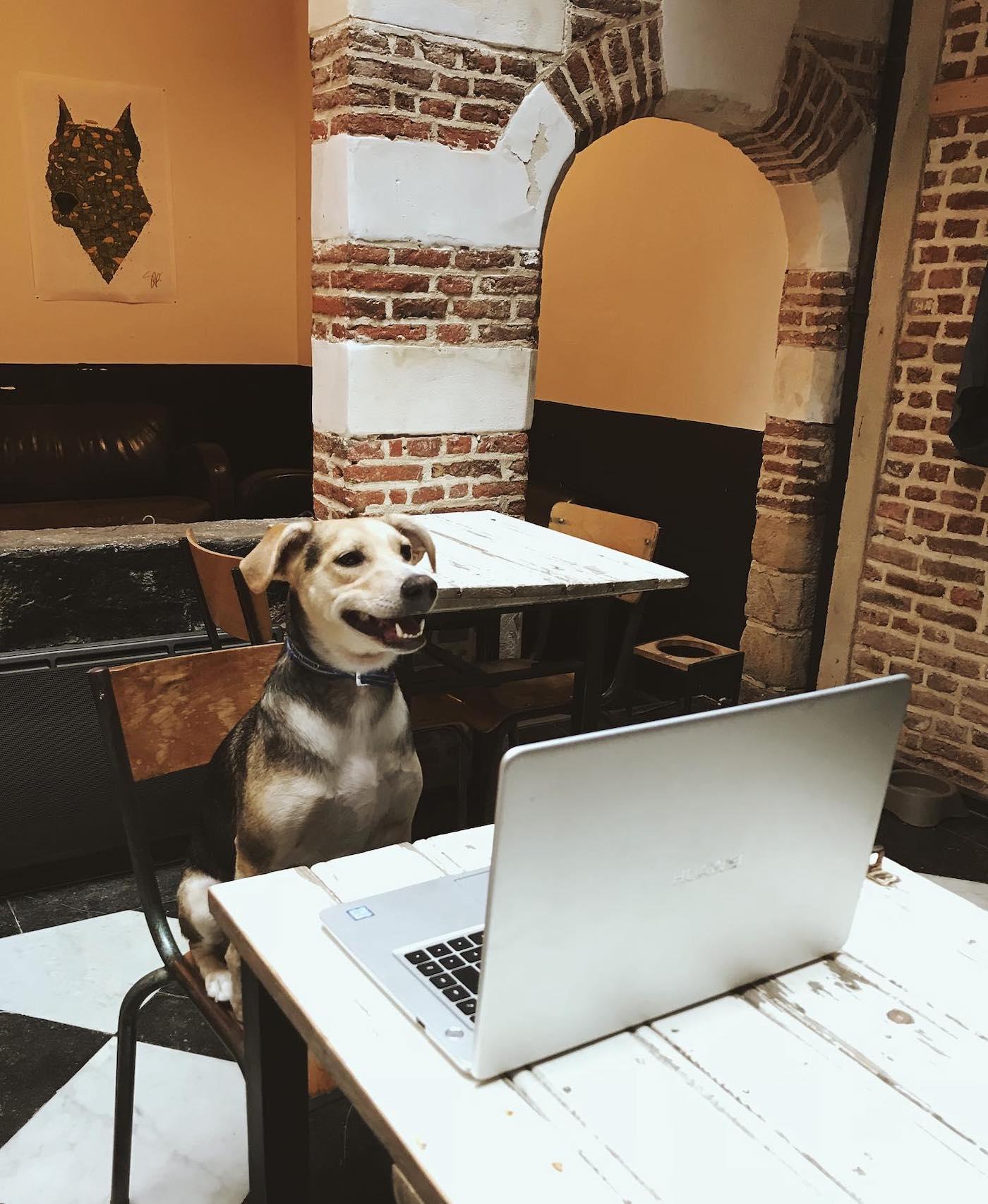 https://i1.wp.com/creapills.com/wp-content/uploads/2019/11/lille-waf-cafe-chiens-adoption-7.jpg?w=1400&ssl=1