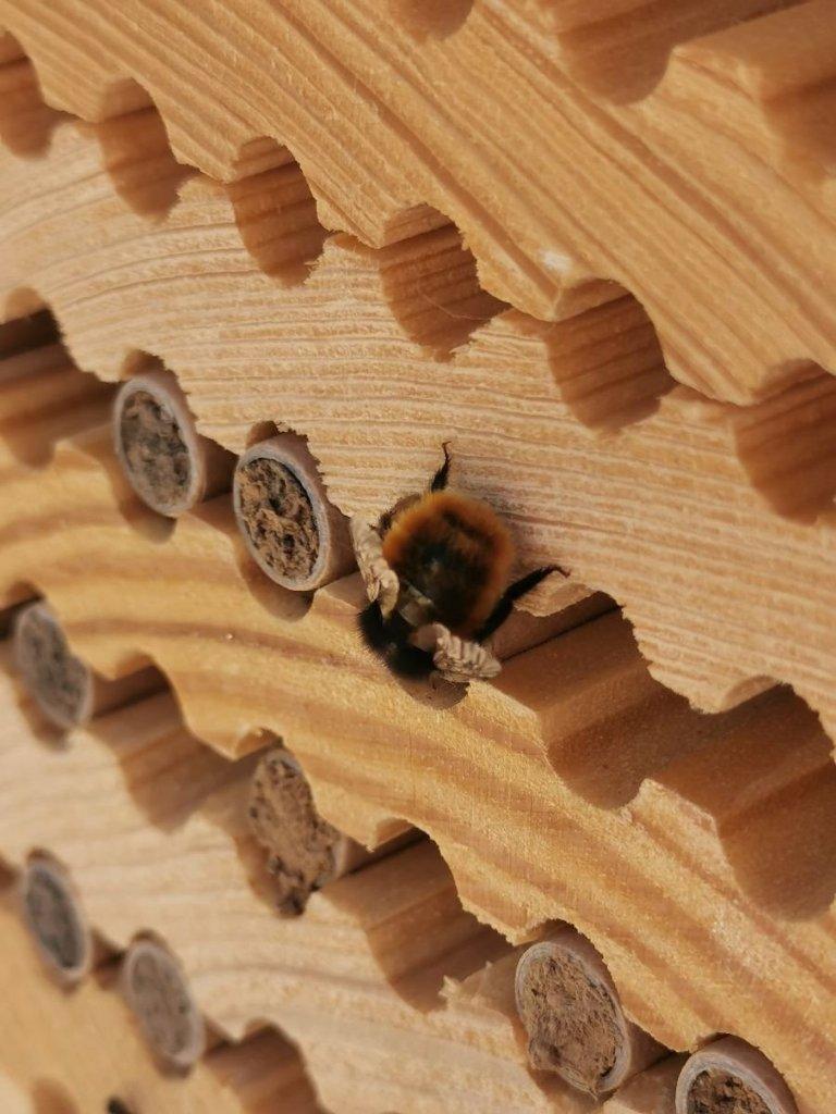 Les dorloteurs d'abeilles vous permettent de préserver les abeilles sauvages