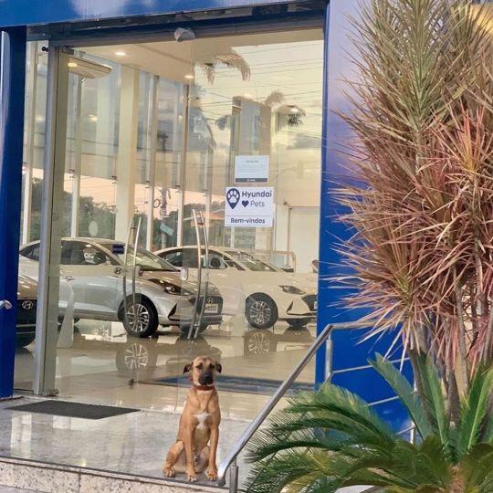 Au Brésil, ce concessionnaire a recruté un chien errant pour devenir sa mascotte