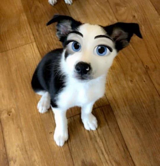 Snapchat sort un filtre qui transforme vos animaux en personnages Disney