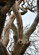 Up tree 2