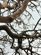 Up tree 4