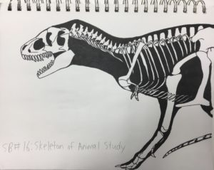 Skeleton Animal Study Sketchbook Assignment Ideas