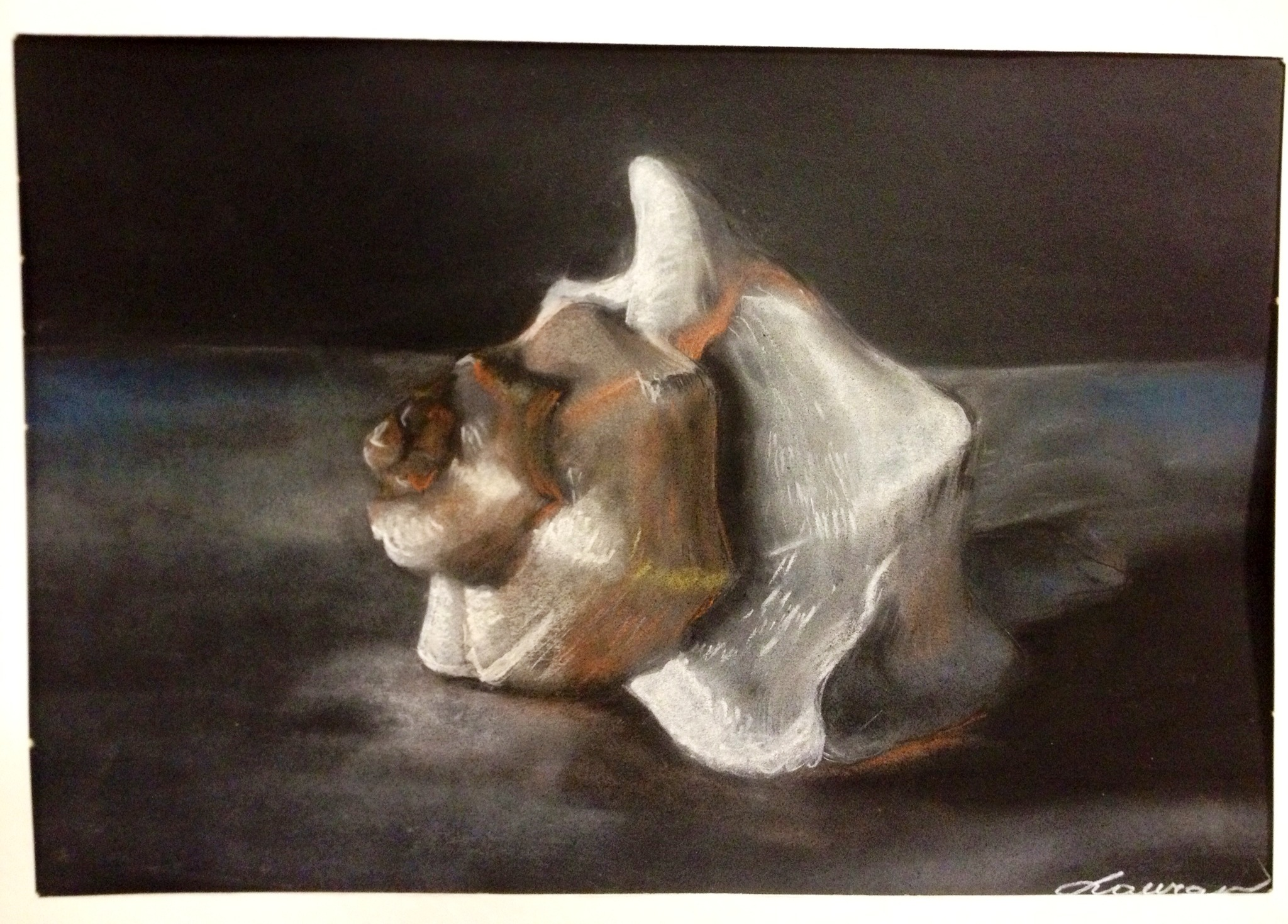 Sea Shell Pastel Drawings Observational Drawing Skills