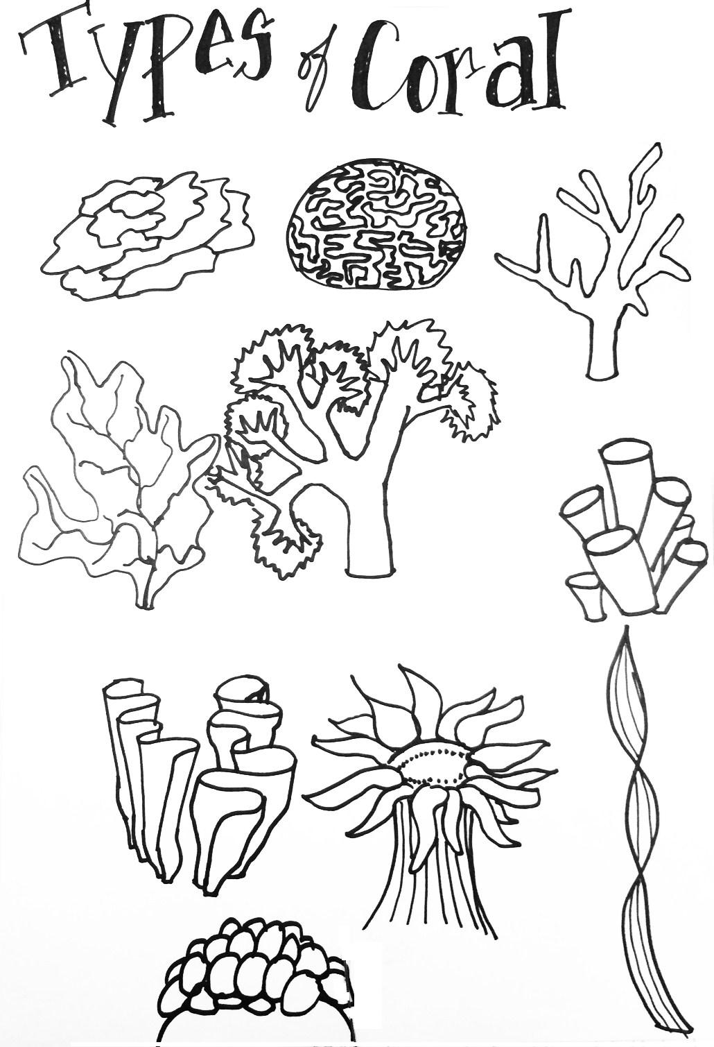 three types of rocks coloring pages | Types of coral - Create Art with ME