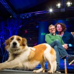 Kate Humble's dog Teg at Hay Festival