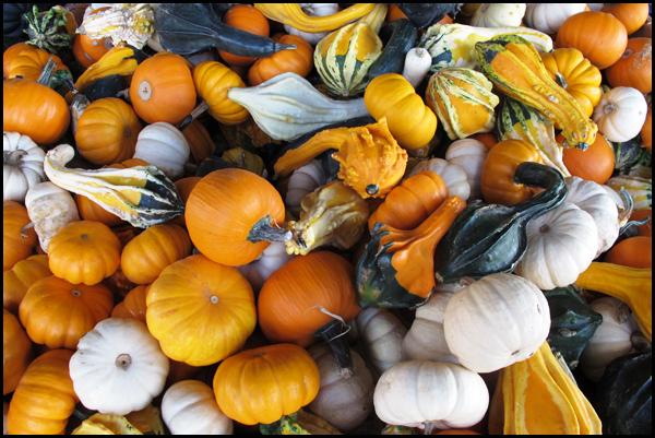 Gourds 2012