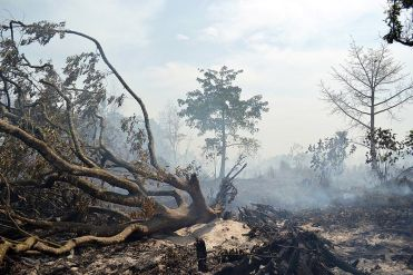 Umwelt Natur Vegan Abholzung