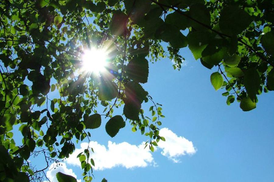 Umwelt Natur Vegan Sonne Klarer Himmel