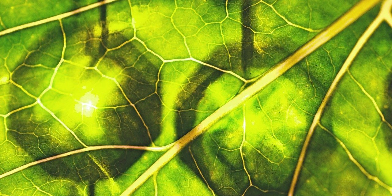 Grüner Saft – Eine Reinigende Nährstoffbombe