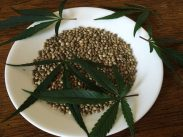 cannabis-seeds-1418321_1280