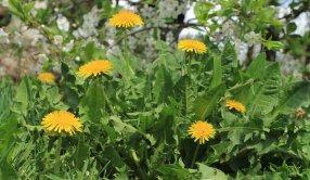 flower-799952_1280