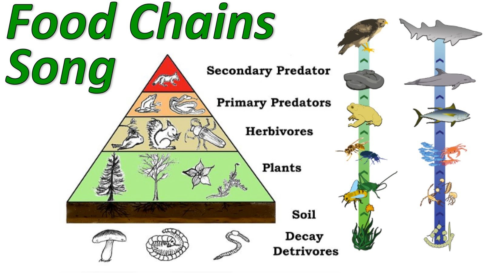 Diagram Ecosystem Trophic Levels