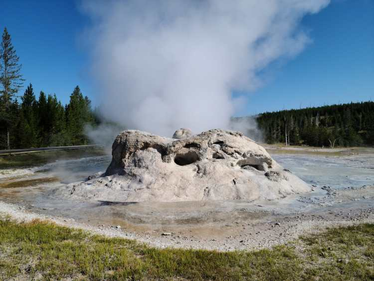 Grotto Geyser at Yellowstone National Park
