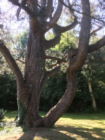 30 - bomen - 9