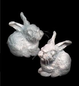 Baby Rabbit Project Image