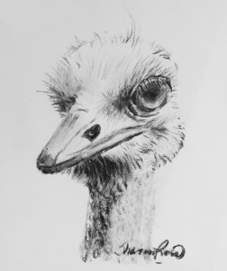 Ornery Ostrich Project Image