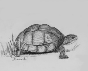 Tuckered out Turtle Project Image