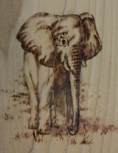 African Elephant Project Image