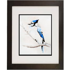 Blue Jay Live Icon