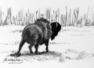 Prairie Buffalo Project Image