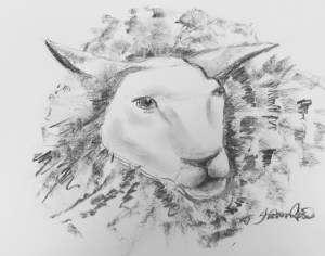 The Sheep Project Image
