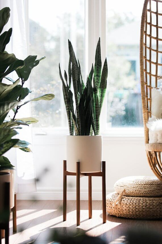 "Shop Small This Holiday Season: Gift this Mid Century Modern Plant Stand with 10"" Matte Blush Ceramic Planter by HookAndStemCo on Etsy for under $100! #giftguide #shopsmall #shophandmade"